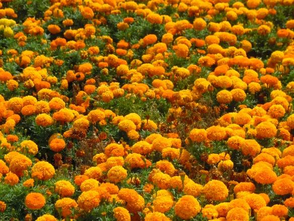 Flores em Miraflores - Lima, Peru