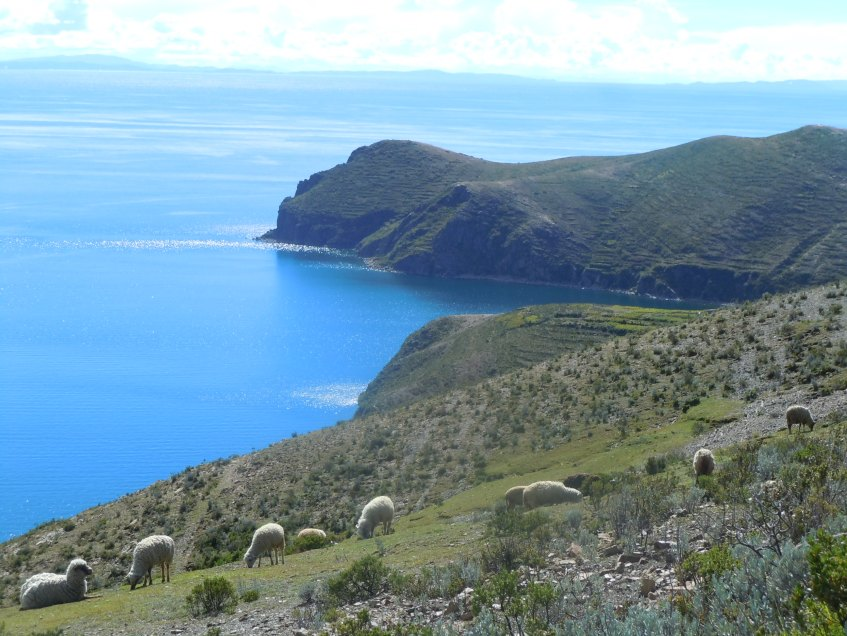 Isla-del-Sol-Bolivia-Lago-Tititcaca-Copacabana-Ovelhas